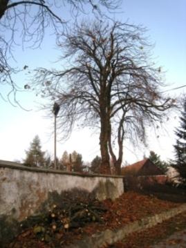 Prořez a úprava stromů